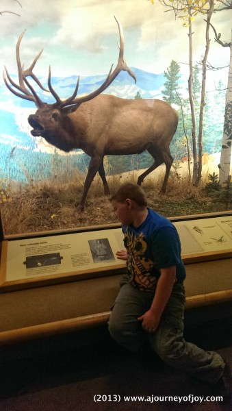 Samuel reading about the Elk.