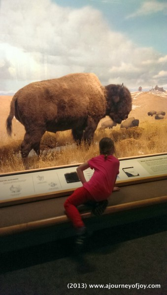 Claire reading about the Bison.